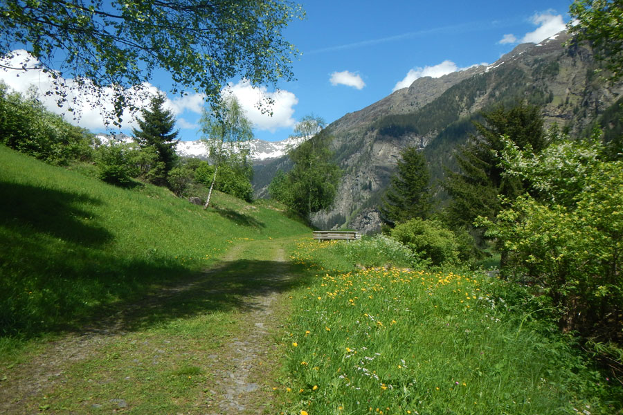 Valley hiking trail
