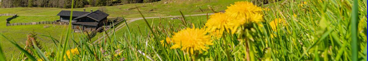 Frühling in Tux Madseit - FeWo Egger Tux